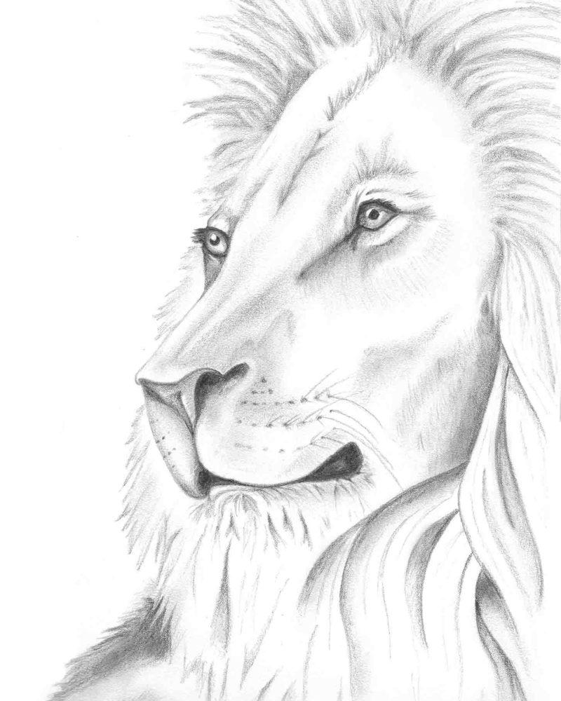 Lion-edit