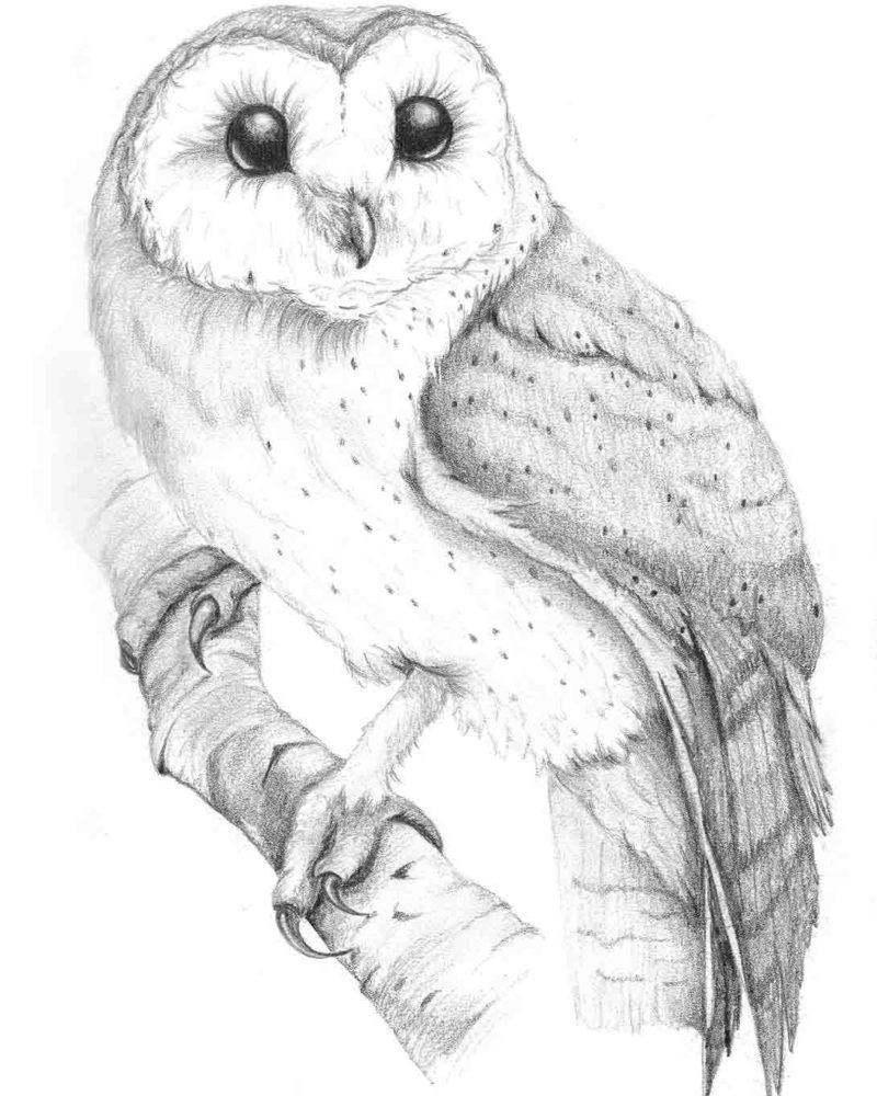 Owl 2-sm